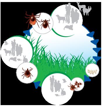paraziták és alternatív kullancsok)